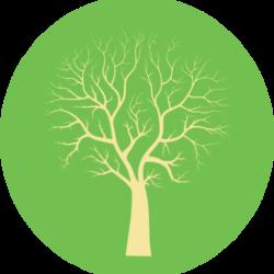 Arjuntree